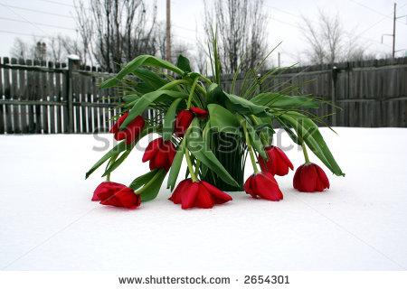 dead-roses