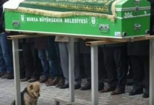 Caesar at owner's funeral