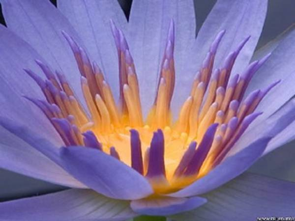 flowerb