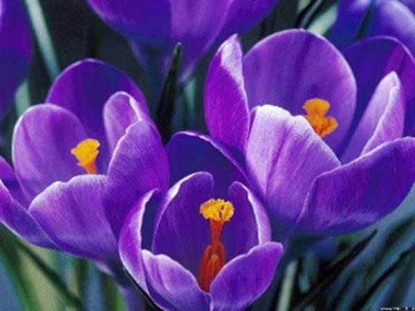 flowerh