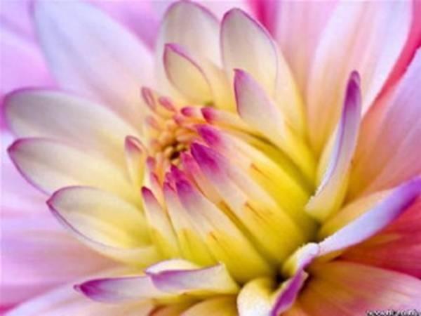 floweri