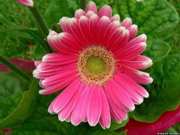 flowerj