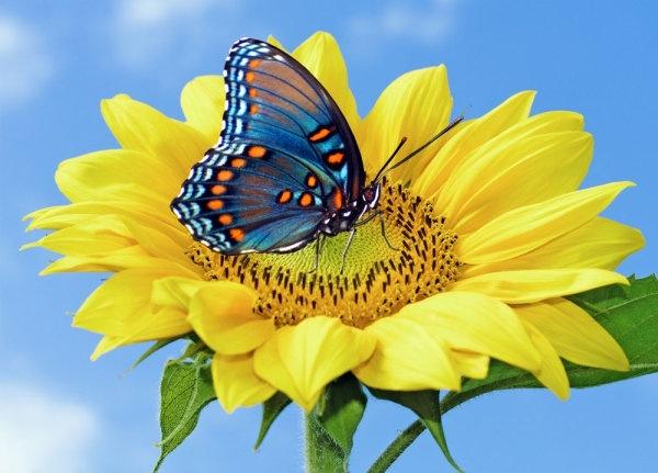 freeflowers