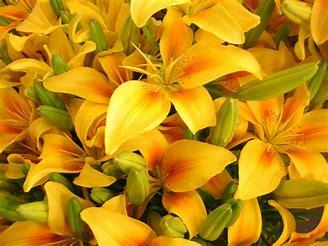 flowers51