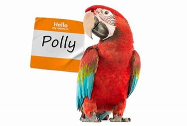 pollyparrot