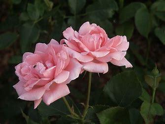 flowers53