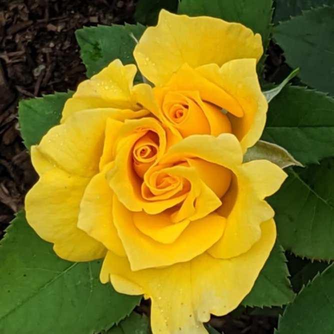 flowersgayle1